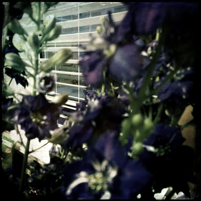 hiding behind the larkspur