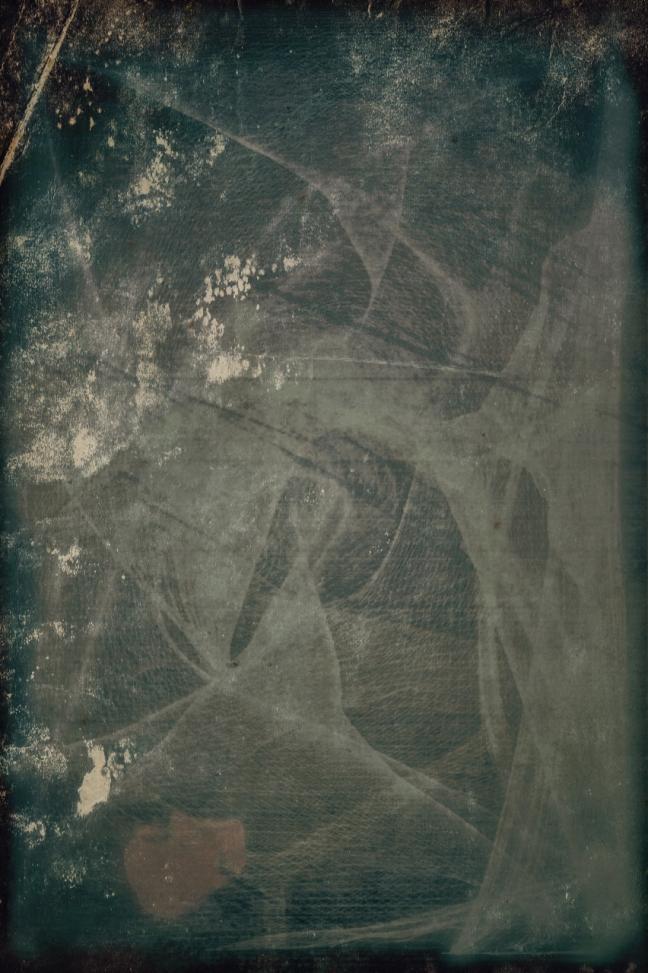 cobweb petal_MG