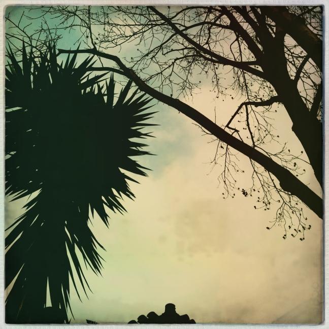 agaveandtree