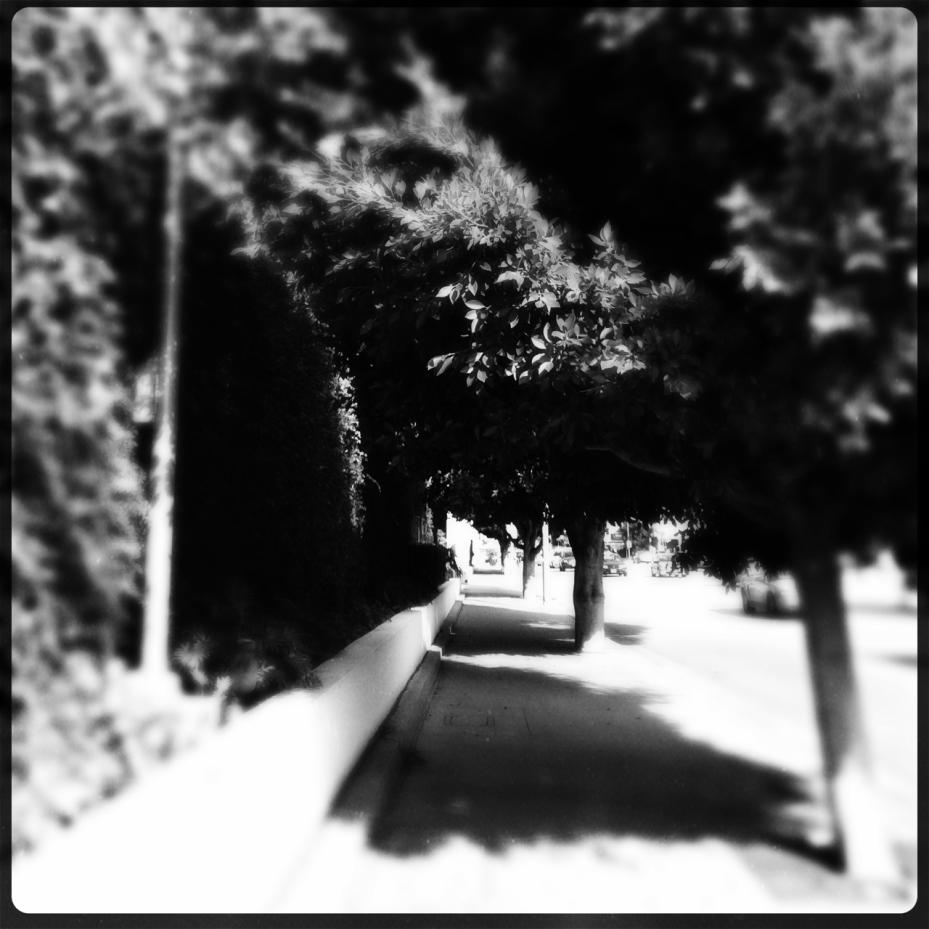ficus sidewalk_