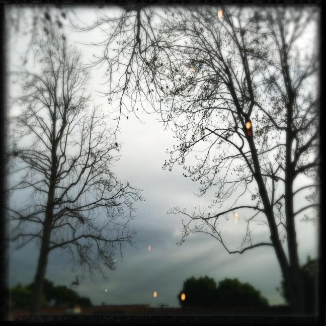 treeslightleaks